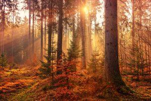 Zomer en herfst overschakeling
